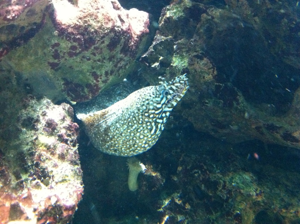 That's a-moray!! Actually it's a tiger eel, but I needed an excuse for my favourite joke of all time.